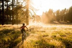 Specialized Rockhopper Expert Mens 29R Mountain Bike 2019